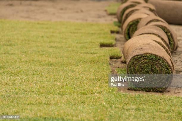 New grass, planting new sod grass