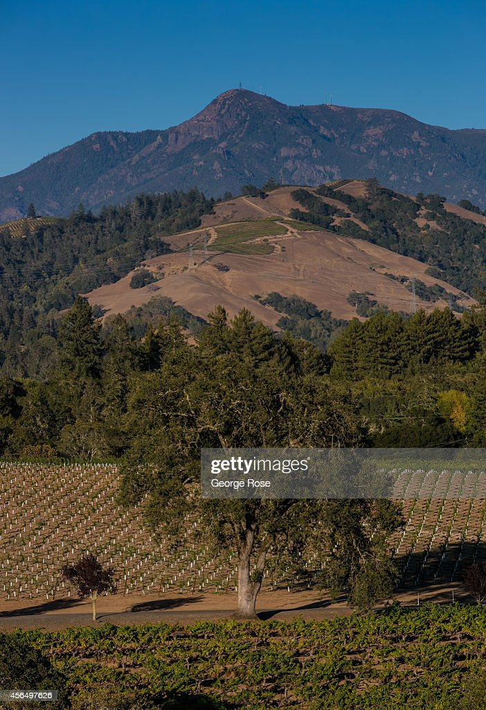 A new hillside cabernet sauvignon vineyard is planted in the shadow of Mount St. Helena on September 15, 2014, near Healdsburg, California. Warm sunny skies in Sonoma County Wine Country have made for excellent grape growing conditions. Despite the drought, the 2014 grape harvest is early and average in terms of tonnage.