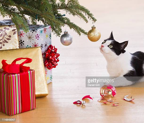 USA, New Jersey, Jersey City, cat breaking Christmas ornaments