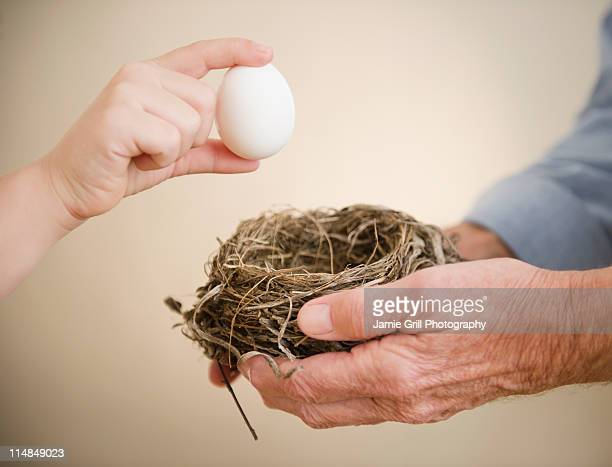 USA, New Jersey, Jersey City, close up of hands of grandfather and grandson (8-9) holding bird's nest and egg