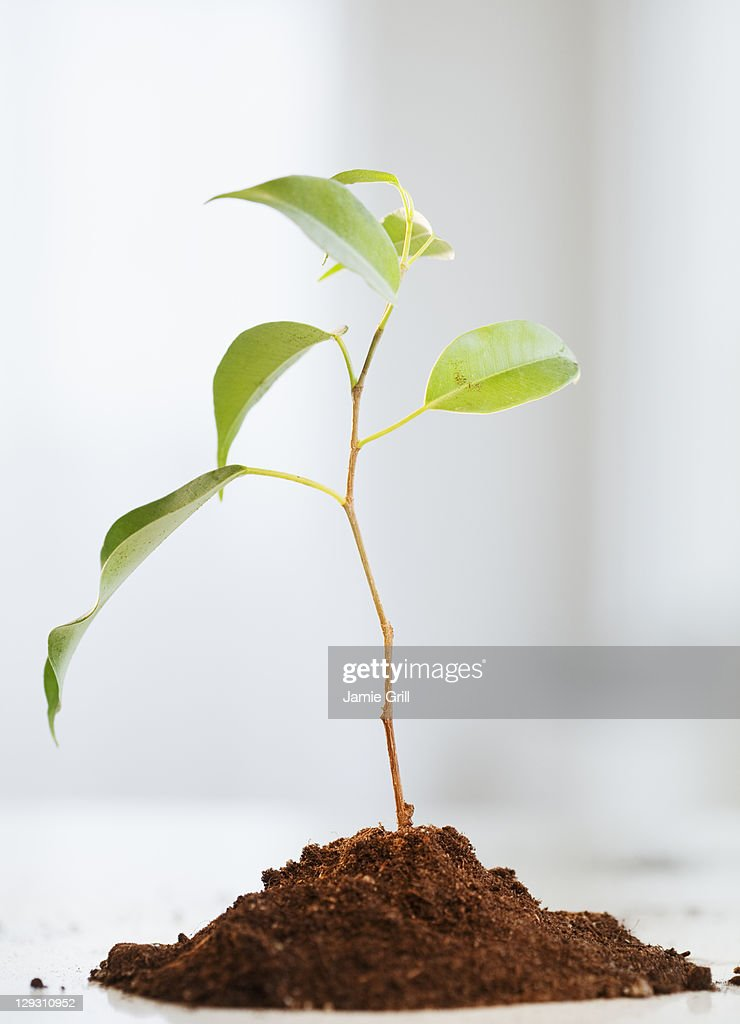 USA, New Jersey, Jersey City, Small plant growing in piece of soil : Stock Photo