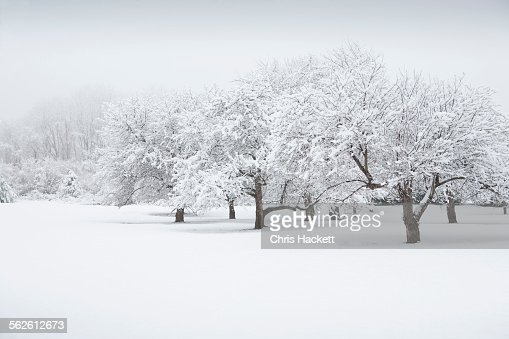 USA, New Jersey, Scenic view of winter landscape