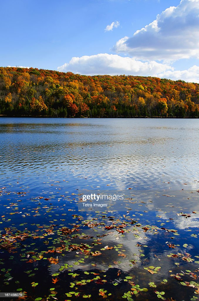 USA, New Jersey, Sparta, Kittatinny State Park, Fallen leaves floating on water : Stock Photo
