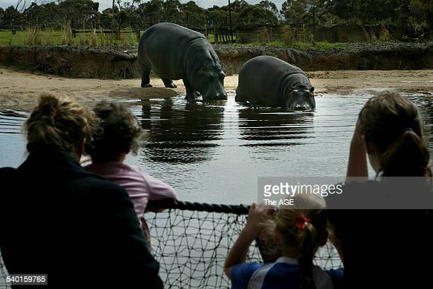 New Kubu River Hippos enclosure at Werribee Open Range Zoo Visitors checking out Hippos Primrose and her baby Tulip who is three and half years old...