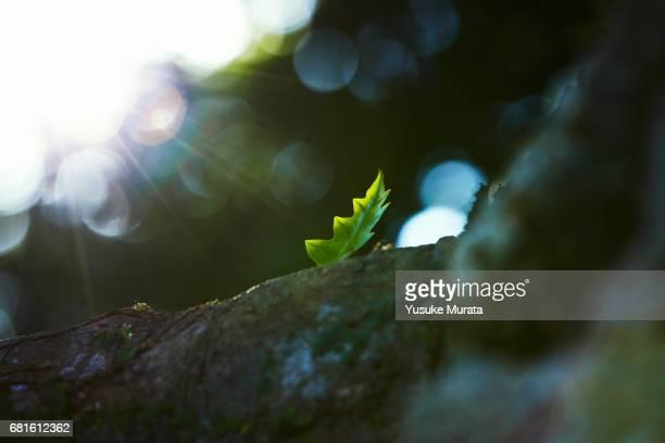 New leaf growing on tree
