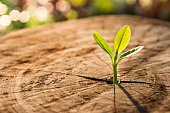 New Life concept with seedling growing sprout (tree).business development symbolic.