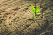 New Life concept with seedling growing sprout (tree).business development symbolic.New Life concept with seedling growing sprout (tree).business development symbolic.