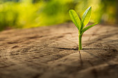 New Life concept with seedling growing sprout (tree).business development symbolic.New Life concept with seedling growing sprout (tree).business development symbolic.New Life concept with seedling gro