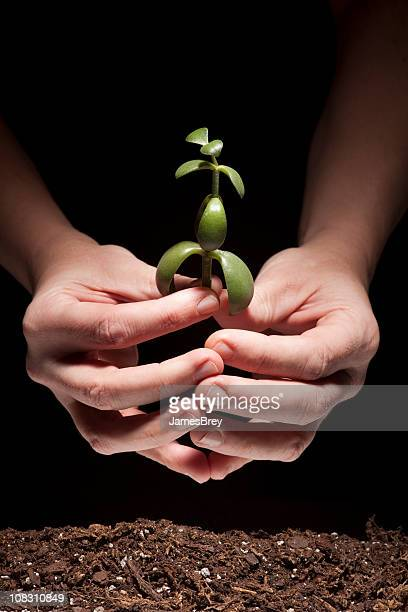 New Life; Hands holding, Planting Tiny Green Plant in Soil