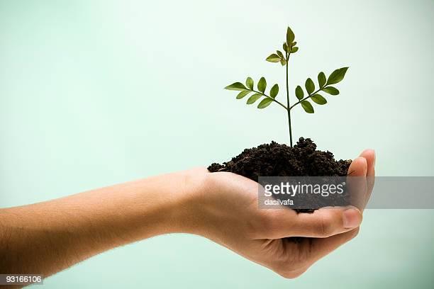新しい生活のヤシの木