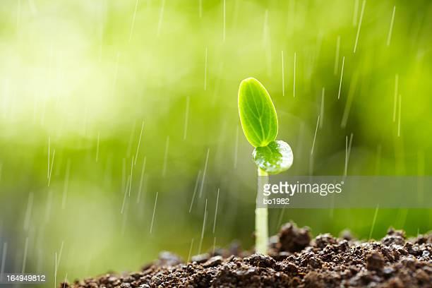 new life in rain