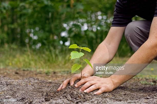 New Leben tree