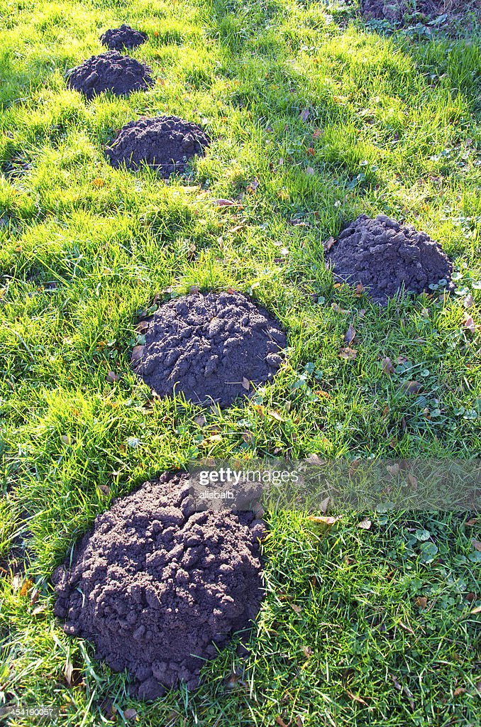 Nuevo molehills césped en jardín : Foto de stock