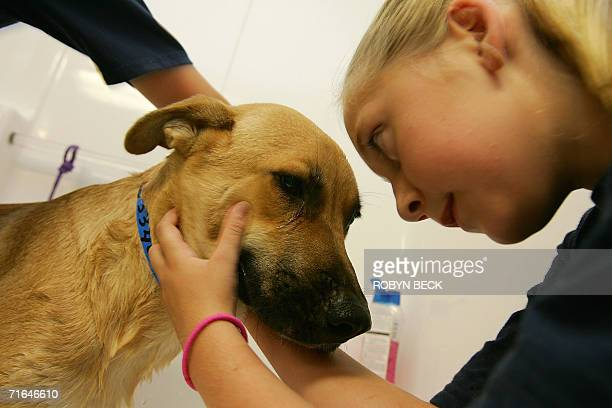 Volunteer Claire Zotkiewicz gives a reassuring look to Yeller a Labrador Retriever German Shepard mix as she and two other volunteers wash the dog at...