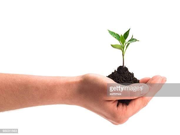 new plant w clipping path