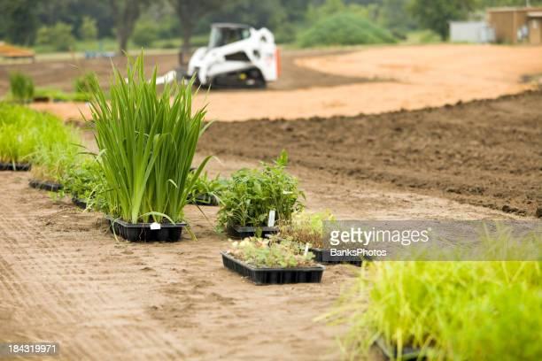 Neue Pflanzen für den kommerziellen Gebäude Feuchtgebiete Landschaft
