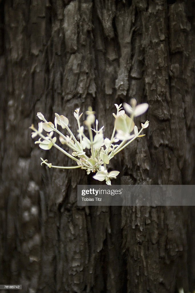A new shoot growing from a tree trunk : Stock Photo