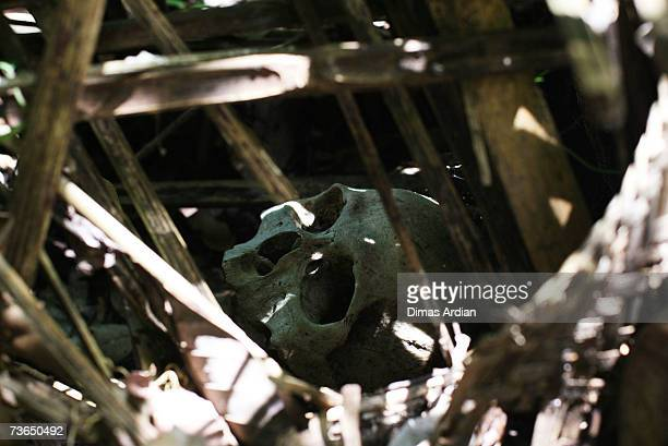 A new skull still covered with bamboo is pictured at a village cemetery in Kuban on March 21 2007 near Trunyan Bali resort island Indonesia Unlike...