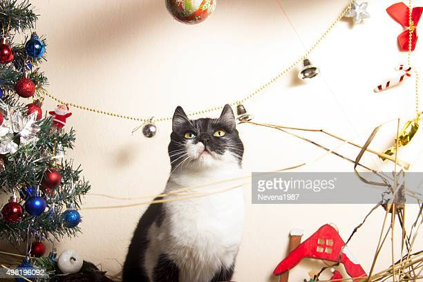 new year kitten with christmas-tree decorations