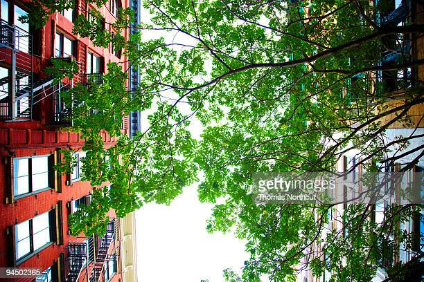New York apartments with tree