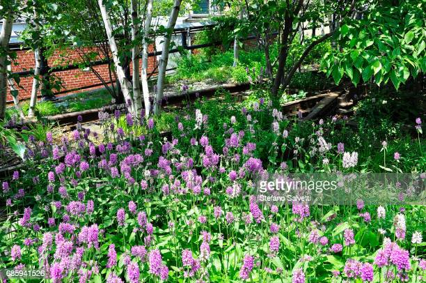 USA, New York, blind track and flowers in High Line