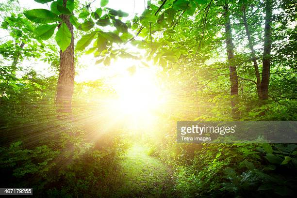 USA, New York City, Green forest at sunrise