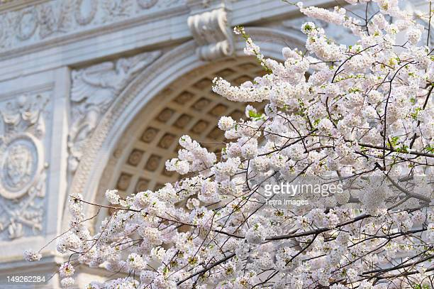 New York City, New York, Close up of blooming trees in Washington Square Park