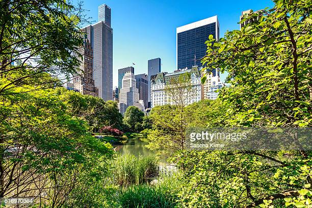 New York Cityscape from Central Park