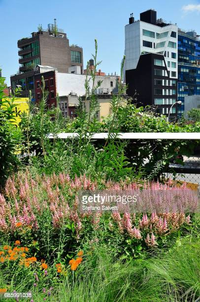 USA, New York, flowers and building from High Line