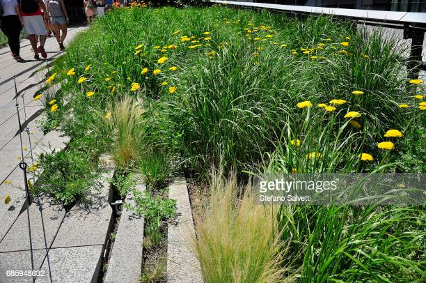 USA, New York, flowers in High Line