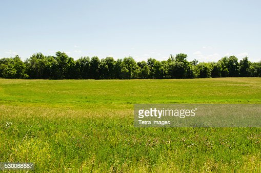 USA, New York, Hudson, View of meadow