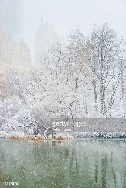 USA, New York, New York City, Central Park, The Pond in winter