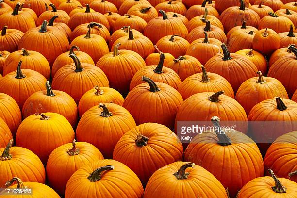 USA, New York, Pumpkins, full frame