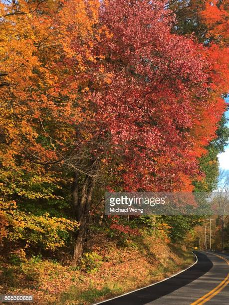 New York road with Fall foliage trees