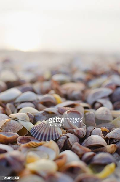 USA, New York State, East Hampton, Shells on beach