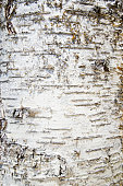 USA, New York State, Lake Placid, Close-up of tree bark