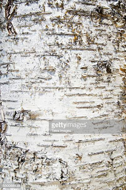 USA, New York State, Lake Placid, Close-up of tree bark