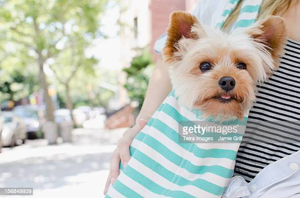 USA, New York State, New York City, Brooklyn, Woman carrying Yorkshire terrier