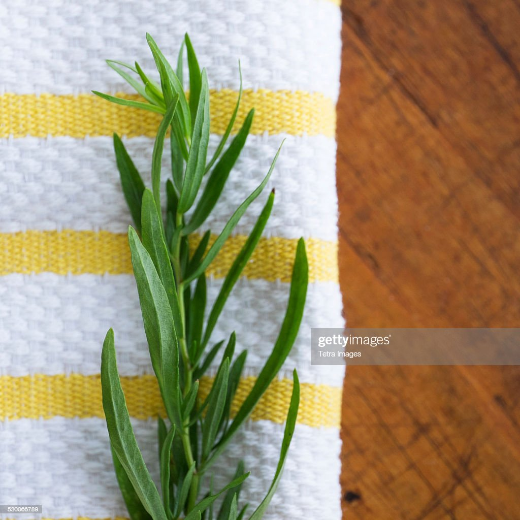 USA, New York State, New York City, Tarragon on table