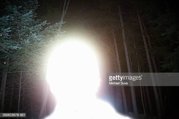 USA, New York State Park, Minnewaska, bright white silhouette in forest