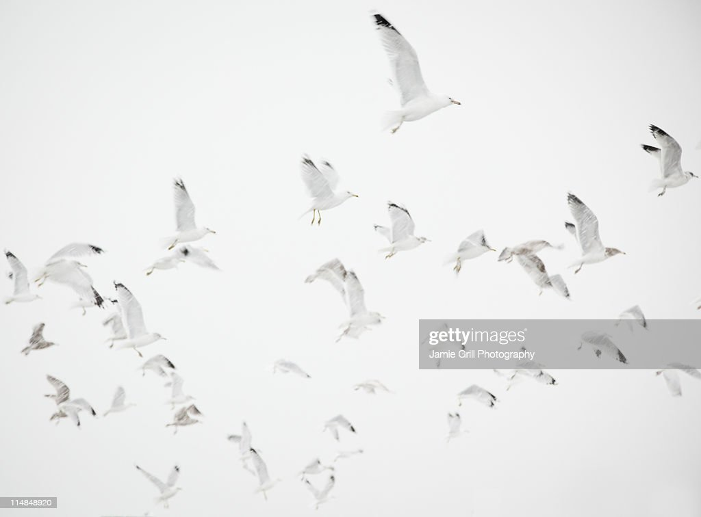 USA, New York State, Rockaway Beach, seagulls in flight