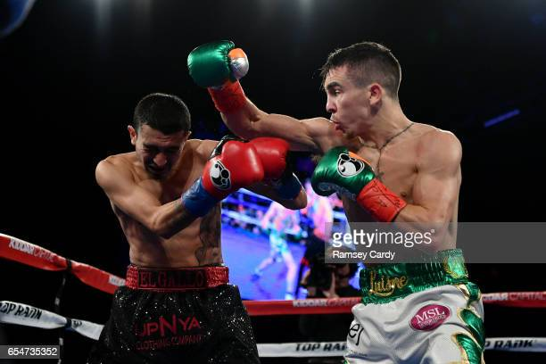 New York United States 17 March 2017 Michael Conlan right in action against Tim Ibarra in their featherweight bout at The Theater in Madison Square...