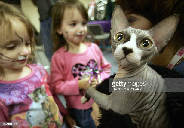 A couple of girls look at Pandy Bear a Sphynx during the 3rd Annual Cat Fanciers AssociationIAMS Cat Championship at Madison Square Garden in New...