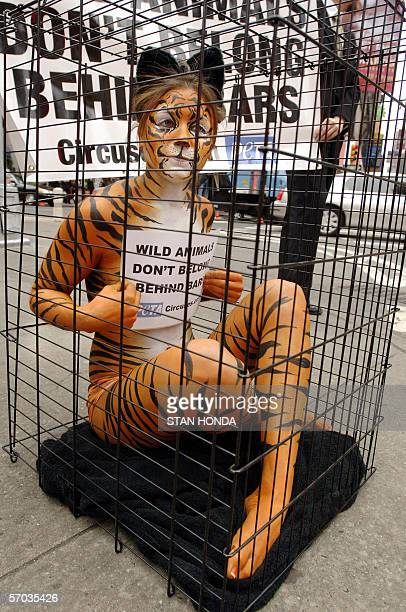 Amy Jannette her nearlynude body painted like a tiger sits in a cage 09 March 2006 in New York's Times Square as part of a PETA protest against the...