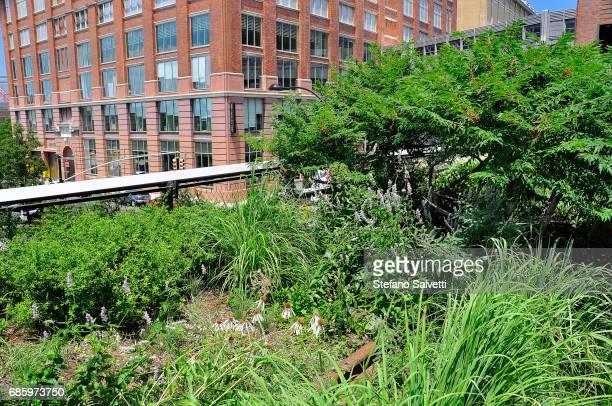 USA, New York, vegetation of High Line