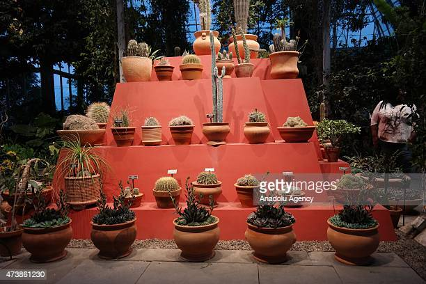 New York's Botanical Garden's exhibition Frida Kahlo Art Garden Life focuses on the artist's engagement with nature in her native Mexico with the...