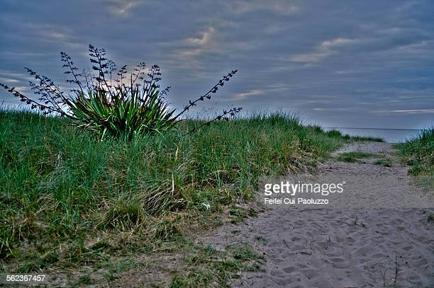 New Zealand flax beach of Rosslare County Wexford