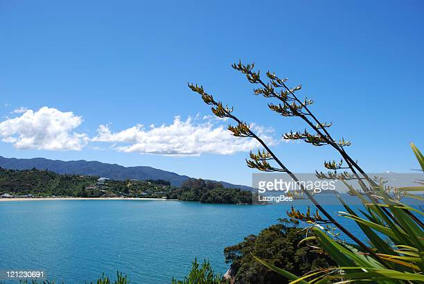 New Zealand Flax Flower with distant Kaiteriteri