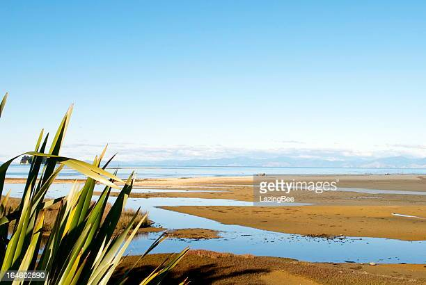 New Zealand Flax with distant Seascape