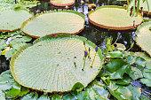 New Zealand: Garden Sanctuaries